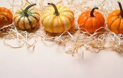 Zucche, Autumn Thanksgiving e fondo variopinti differenti di Halloween fotografia stock libera da diritti