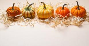 Zucche, Autumn Thanksgiving e fondo variopinti differenti di Halloween immagini stock libere da diritti