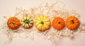 Zucche, Autumn Thanksgiving e fondo variopinti differenti di Halloween fotografie stock libere da diritti