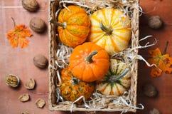 Zucche, Autumn Thanksgiving e fondo variopinti differenti di Halloween immagini stock