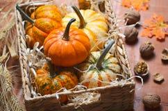 Zucche, Autumn Thanksgiving e fondo variopinti differenti di Halloween fotografie stock