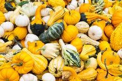 Zucche brillantemente colorate su visualizzazione Fotografia Stock Libera da Diritti