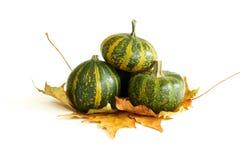 zucche con i fogli di autunno su bianco immagine stock