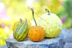 Zucche con l'autunno Fotografia Stock Libera da Diritti