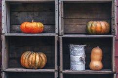 Zucche Curvy dell'azienda agricola di giallo arancio di forma in scatole di legno sullo scaffale del mercato Fotografie Stock