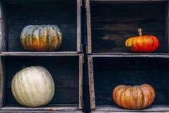 Zucche Curvy dell'azienda agricola di giallo arancio di forma in scatole di legno sullo scaffale del mercato Immagine Stock