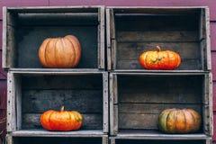 Zucche Curvy dell'azienda agricola di giallo arancio di forma in scatole di legno sullo scaffale del mercato Fotografia Stock