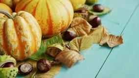 Zucche decorate con le castagne e le foglie stock footage