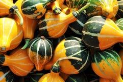 Zucche decorative Immagini Stock