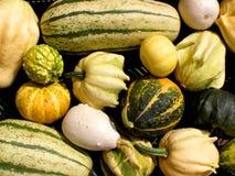 Zucche decorative Fotografia Stock