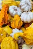 Zucche decorative Immagini Stock Libere da Diritti