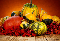 Zucche decorative Immagine Stock