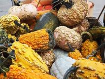 Zucche decorative! Fotografie Stock