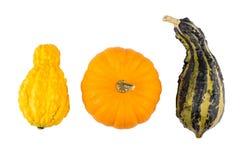 Zucche decorative su bianco Fotografie Stock Libere da Diritti