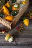 Zucche decorative in una scatola di legno Fotografie Stock