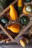 Zucche decorative in una scatola di legno Fotografia Stock Libera da Diritti
