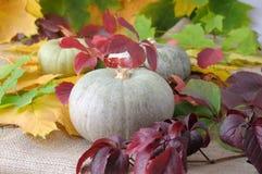 Zucche dei fogli di autunno Immagini Stock