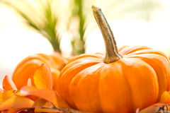 Zucche del bambino su un letto delle foglie di caduta Fotografia Stock