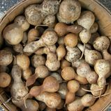 Zucche del Brown Fotografia Stock