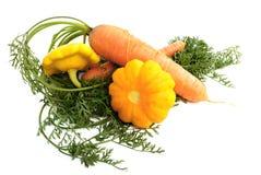 Zucche del Bush e delle carote. Fotografie Stock