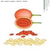 Zucche del cardo con vitamina A e minerali Fotografia Stock