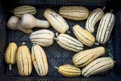 Zucche del mercato fotografie stock libere da diritti