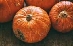 Zucche del raccolto di autunno su un fondo della tela immagini stock