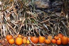Zucche del raccolto di caduta della Nuova Inghilterra Immagini Stock