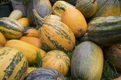 Zucche del raccolto impilate in un grande mucchio Fotografia Stock
