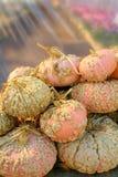Zucche dell'arachide Immagine Stock