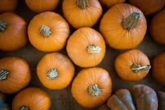 Zucche dell'arancia del raccolto fotografie stock