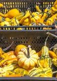 Zucche delle dimensioni differenti Fotografia Stock