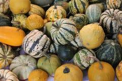 Zucche delle zucche Fotografia Stock