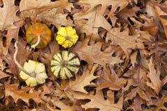 Zucche di autunno Immagine Stock Libera da Diritti