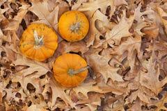 Zucche di autunno immagini stock libere da diritti