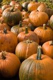 Zucche di autunno (caduta) Immagine Stock