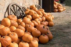 Zucche di autunno mature sull'azienda agricola Fotografia Stock