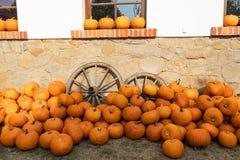 Zucche di autunno mature sull'azienda agricola Immagini Stock