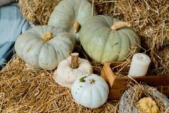 Zucche di autunno su paglia Immagini Stock