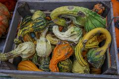 Zucche di autunno in un bsaket fotografie stock libere da diritti