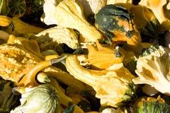 Zucche di Halloween Fotografia Stock