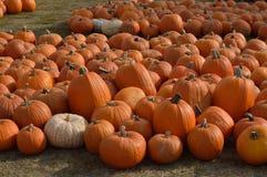Zucche di Halloween Fotografie Stock