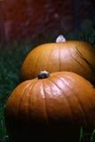 Zucche di Halloween all'indicatore luminoso di luna Fotografia Stock Libera da Diritti