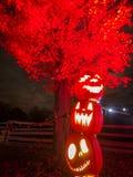 Zucche di Halloween alla notte Fotografia Stock