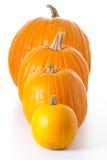 Zucche di Halloween isolate Immagini Stock