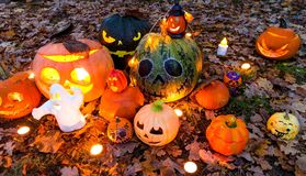 Zucche di Halloween nel giardino Immagine Stock Libera da Diritti