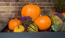 Zucche di Halloween su esposizione Fotografia Stock