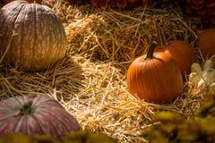 Zucche di Halloween su un letto di fieno Immagini Stock