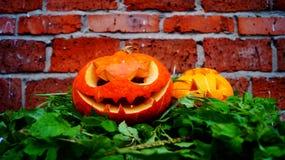 Zucche di Halloween su una foglia della felce Immagini Stock Libere da Diritti