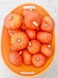 Zucche dorate della pepita Fotografie Stock Libere da Diritti